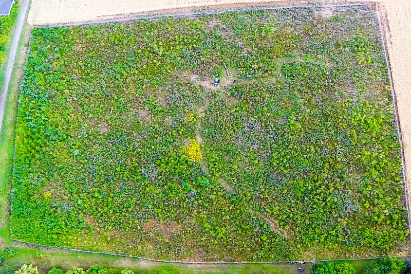 2015-6-Waldbild-nachher-1